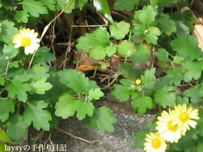 20110103-07.jpg